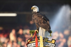 19-04-2019: - The Eagle - Voetbal: Go Ahead Eagles v Jong PSV: DeventerKeukenkampioendivisie seizoen 2018-2019L-R: The Eagle of Go Ahead Eagles
